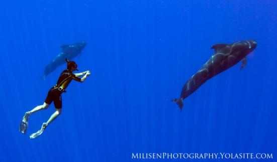 Daniel Fox and Pilot Whales
